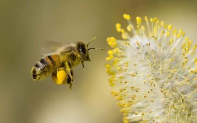 Växter som bin gillar
